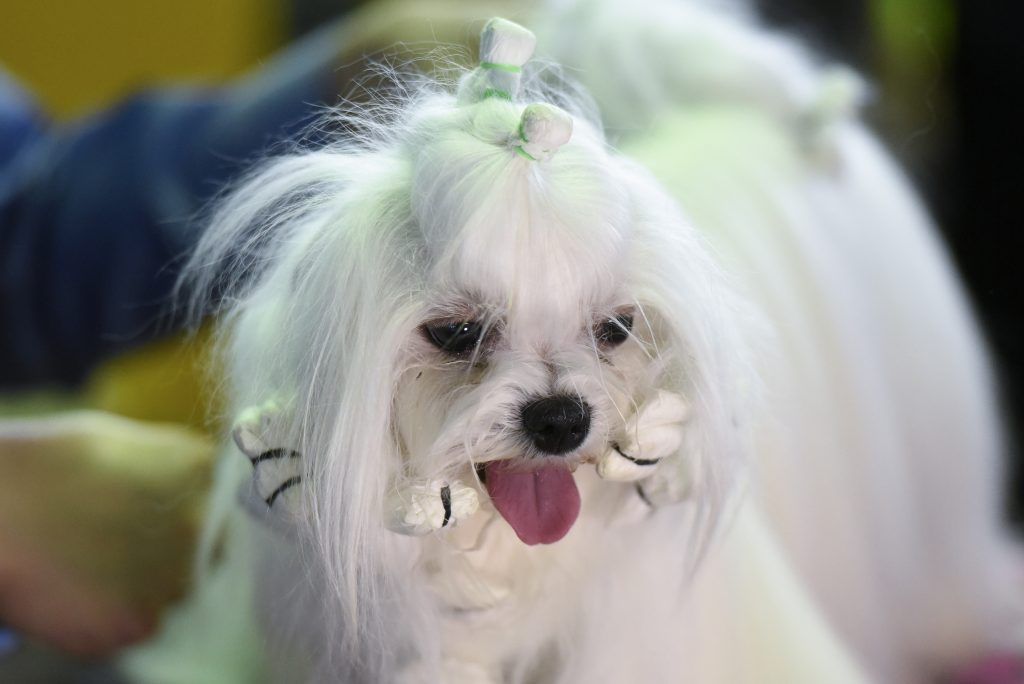 Dog grooming fort lauderdale